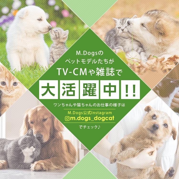 M.DogsのペットモデルたちがTV-CMや雑誌で大活躍中!