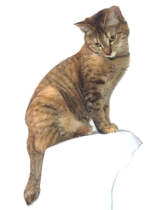 エムドッグス,動物プロダクション,ペットモデル,ペットタレント,モデル猫,タレント猫,MIX,チグ