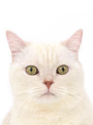エムドッグス,動物プロダクション,ペットモデル,ペットタレント,モデル猫,タレント猫,マンチカン,コイン