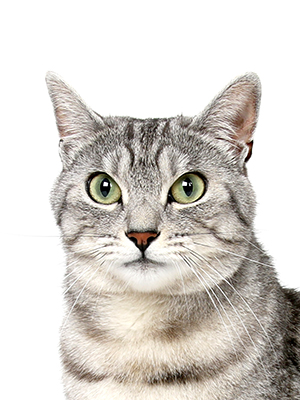 エムドッグス,動物プロダクション,ペットモデル,ペットタレント,モデル猫,タレント猫,MIX,ジョニ