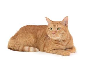 エムドッグス,動物プロダクション,ペットモデル,ペットタレント,モデル猫,タレント猫,MIX猫,月,つき