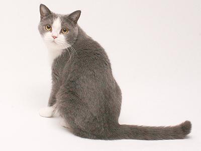 エムドッグス,動物プロダクション,ペットモデル,ペットタレント,モデル猫,タレント猫