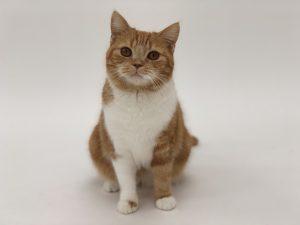 ペットモデル 猫 くつした