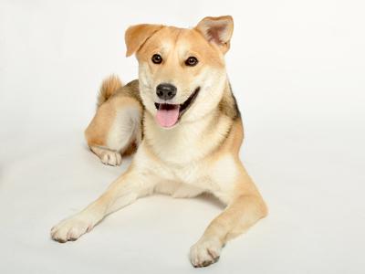 エムドッグス,動物プロダクション,ペットモデル,ペットタレント,モデル犬,タレント犬,MIX,joy