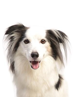 エムドッグス,動物プロダクション,ペットモデル,ペットタレント,モデル犬,タレント犬,MIX犬,リーフ