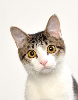 エムドッグス,動物プロダクション,ペットモデル,ペットタレント,モデル猫,タレント猫,MIX,コロン