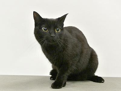 ペットモデル MIX猫「ひな」
