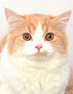エムドッグス,動物プロダクション,ペットモデル,ペットタレント,モデル猫,タレント猫,ミヌエット,マル