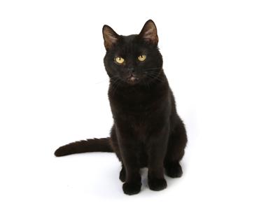 エムドッグス,動物プロダクション,ペットモデル,ペットタレント,モデル猫,タレント猫,MIX猫,くろまめ