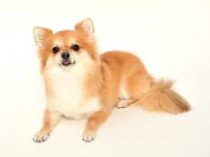 エムドッグス,動物プロダクション,ペットモデル,ペットタレント,モデル犬,タレント犬,MIX,カラ