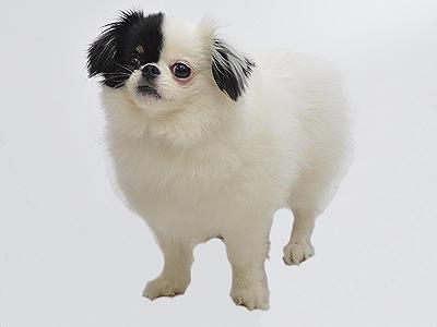 動物プロダクション エムドッグス ペットモデル ミックス犬 らむ