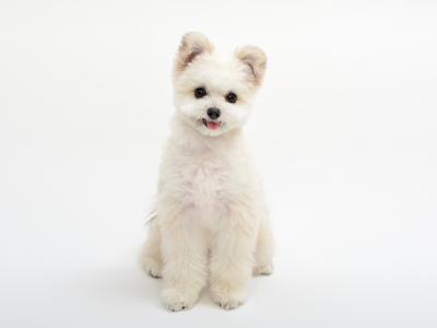 エムドッグス,動物プロダクション,ペットモデル,ペットタレント,モデル犬,タレント犬,MIX,夢翔(ゆめと)