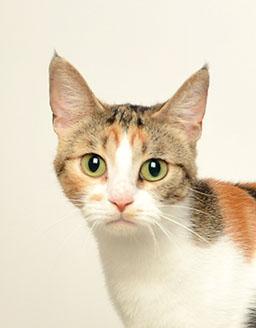 エムドッグス,動物プロダクション,ペットモデル,ペットタレント,モデル猫,タレント猫,ラムキン,紅葉