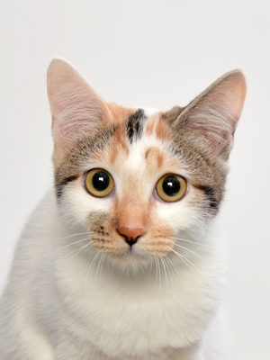 エムドッグス,動物プロダクション,ペットモデル,ペットタレント,モデル猫,タレント猫,MIX,NAVEL