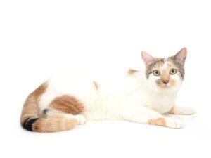 エムドッグス,動物プロダクション,ペットモデル,ペットタレント,モデル猫,タレント猫,MIX猫,NAVEL,ネーブル