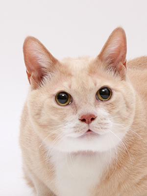 エムドッグス,動物プロダクション,ペットモデル,ペットタレント,モデル猫,タレント猫,MIX,こなつ