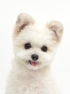 エムドッグス,動物プロダクション,ペットモデル,ペットタレント,モデル犬,タレント犬,MIX,ゆめと