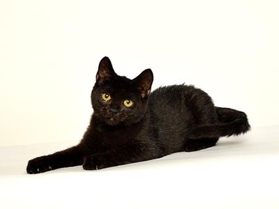 ペットモデル,動物プロダクション,エムドッグス,タレント猫,モデル猫,ミックス,くろまめ