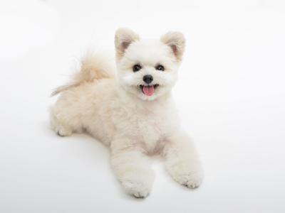 動物プロダクション エムドッグス ペットモデル ミックス犬 ゆめと