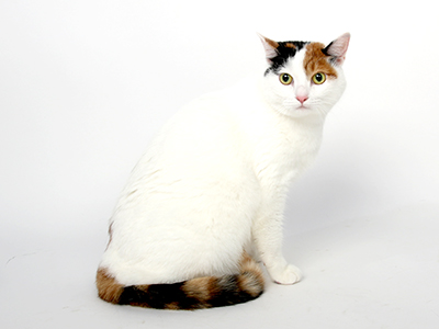 エムドッグス,動物プロダクション,ペットモデル,ペットタレント,モデル猫,タレント猫,MIX,みら