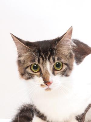 エムドッグス,動物プロダクション,ペットモデル,ペットタレント,モデル猫,タレント猫,MIX,桜