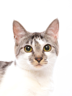 エムドッグス,動物プロダクション,ペットモデル,ペットタレント,モデル猫,タレント猫,MIX,杏