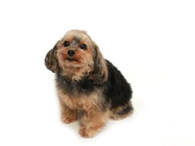 エムドッグス,動物プロダクション,ペットモデル,ペットタレント,モデル犬,タレント犬,MIX犬,つくね