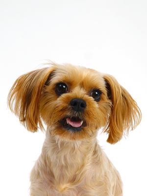 エムドッグス,動物プロダクション,ペットモデル,ペットタレント,モデル犬,タレント犬,MIX,サンテ