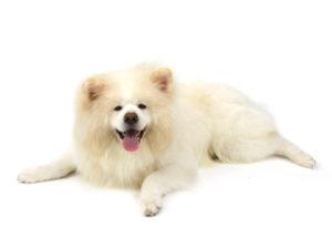 エムドッグス,動物プロダクション,ペットモデル,ペットタレント,モデル犬,タレント犬,秋田犬,福