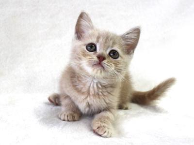 ペットモデルの動物プロダクション