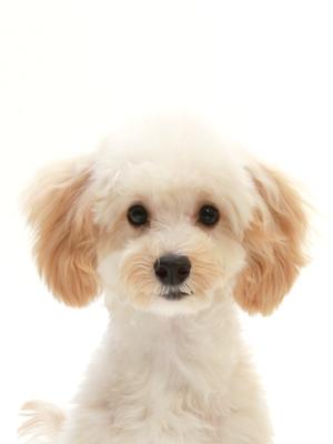 ペットモデル ミックス犬 Lent