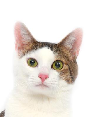 エムドッグス,動物プロダクション,ペットモデル,ペットタレント,モデル猫,タレント猫,MIX,そー