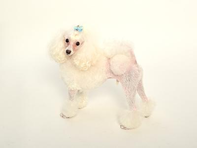 エムドッグス,動物プロダクション,ペットモデル,ペットタレント,モデル犬,タレント犬,トイプードル,シェリ