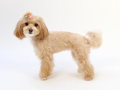 エムドッグス,動物プロダクション,ペットモデル,ペットタレント,モデル犬,タレント犬, MIX,恵