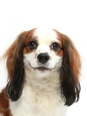 エムドッグス,動物プロダクション,ペットモデル,ペットタレント,モデル犬,タレント犬,MIX,ミヨ