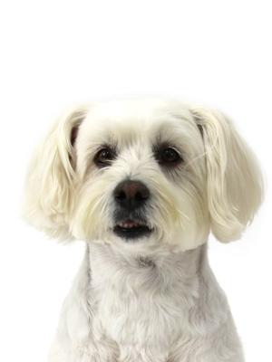 エムドッグス,動物プロダクション,ペットモデル,ペットタレント,モデル犬,タレント犬,MIX,マリー