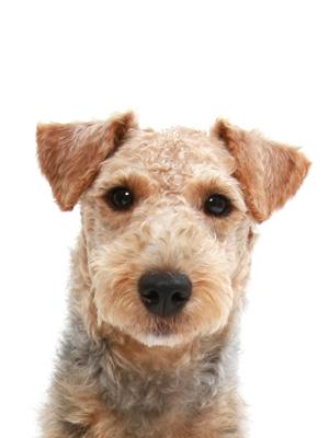 エムドッグス,動物プロダクション,ペットモデル,ペットタレント,モデル犬,タレント犬,ウェルシュテリア,空