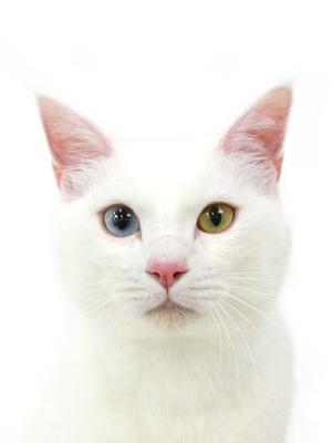 エムドッグス,動物プロダクション,ペットモデル,ペットタレント,モデル猫,タレント猫,MIX猫,にじ