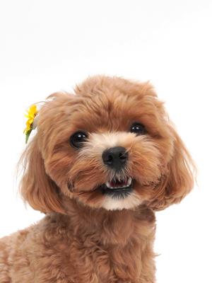 エムドッグス,動物プロダクション,ペットモデル,ペットタレント,モデル犬,タレント犬,MIX,めい