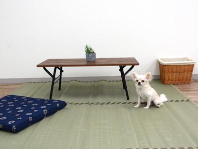 エムドッグス,動物プロダクション,ペットモデル,ペットタレント,モデル犬,タレント犬,チワワ,とろろ