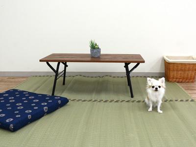 エムドッグス,動物プロダクション,ペットモデル,ペットタレント,モデル犬,タレント犬,チワワ,にこる