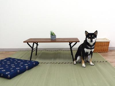 エムドッグス,動物プロダクション,ペットモデル,ペットタレント,モデル犬,タレント犬,柴犬,ゆず