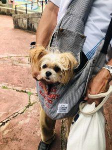 エムドッグス,動物プロダクション,ペットモデル,ペットタレント,モデル犬,タレント犬,MIX犬,モモ