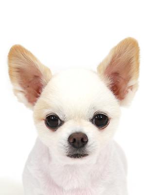 エムドッグス,動物プロダクション,ペットモデル,ペットタレント,モデル犬,タレント犬,MIX犬,小次郎