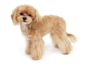 エムドッグス,動物プロダクション,ペットモデル,ペットタレント,モデル犬,タレント犬,MIX犬,レッヒェルン