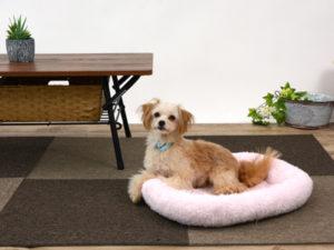 エムドッグス,動物プロダクション,ペットモデル,ペットタレント,モデル犬,タレント犬,MIX犬,キミ