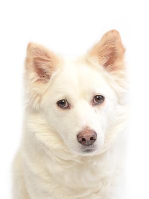 エムドッグス,動物プロダクション,ペットモデル,ペットタレント,モデル犬,タレント犬,MIX犬,銀牙,ぎんが