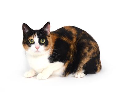 エムドッグス,動物プロダクション,ペットモデル,ペットタレント,モデル猫,タレント猫,MIX猫,サーバル
