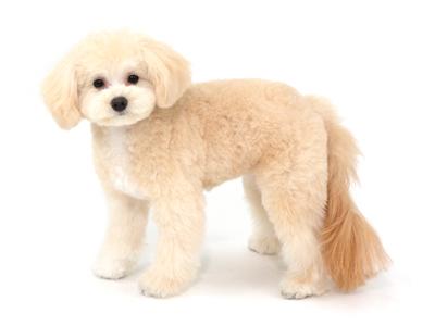 エムドッグス,動物プロダクション,ペットモデル,ペットタレント,モデル犬,タレント犬,MIX,はる