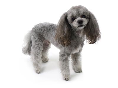 エムドッグス,動物プロダクション,ペットモデル,ペットタレント,モデル犬,タレント犬,MIX,セナ